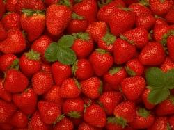 Strawberries free wallpaper in free desktop backgrounds category: Strawberry-images.