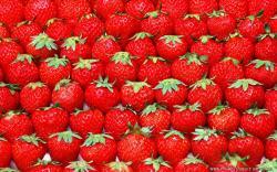 Strawberry Background 15994