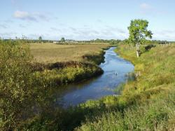 Stream in Arkhangelsk Oblast, Russia