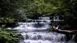 File:Christman Sanctuary, Stream.jpg