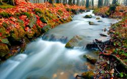 Fantastic Forest Stream Wallpaper