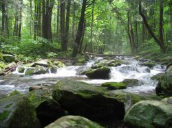 Photograph of large stream