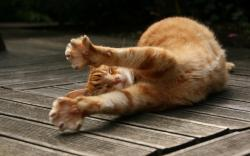 Stretching cat