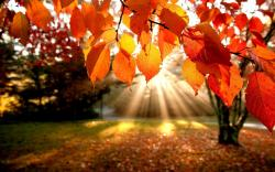 nature trees autumn leaves hd wallpaper