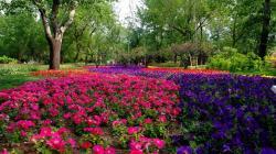 Stunning Flower Landscape 29018 1920x1080 px