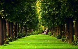 Download Forest Background 18564