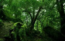 Forest Moss Wallpaper