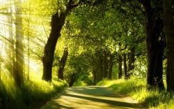 Stunning Forest Road Wallpaper