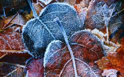 """Download the following Stunning Frost Wallpaper 29705 by clicking the orange button positioned underneath the """"Download Wallpaper"""" section."""