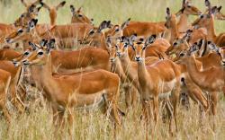 Stunning Herd Wallpaper 42797 2560x1600 px