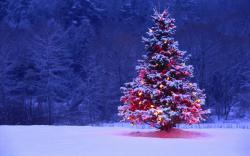 Christmas Tree HD Wallpaper Free Download