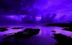 Stunning Violet Wallpaper