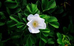 ... White Flowers Wallpaper ...
