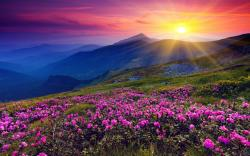 """Download the following Stunning Wildflower Wallpaper 37096 by clicking the orange button positioned underneath the """"Download Wallpaper"""" section."""