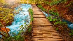 Stunning Wooden Path Wallpaper