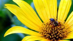 Stunning Yellow Flowers 14155 1440x900 px