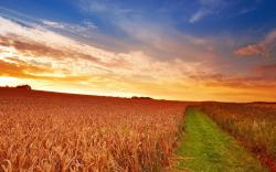 Summer countryside scenery