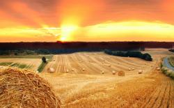 Summer field hay sunset