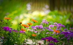 Summer flowers bumblebee