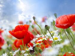 Summer Flowers 29979 1920x1200 px