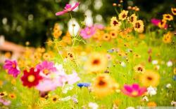 HD Quality Summer Flowers Desktop Background 2 Wallpaper - SiWallpaper 5501