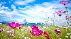 Summer Flowers Wallpaper