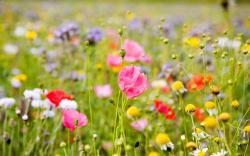 Summer Flower Background Best Desktop Backgrou Hd Wallpaper
