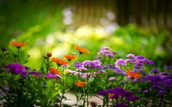 Summer Flowers 40 Desktop Background Wallpaper