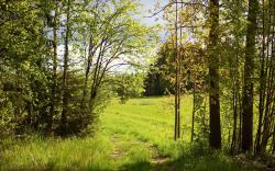 Summer forest meadow