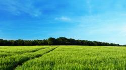 ... Green Summer Catcher Landscape Wallpaper ...