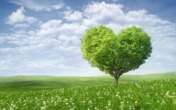 Summer heart tree