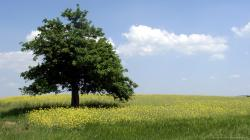 ... Summer Tree for 1366x768