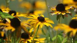 Description: The Wallpaper above is Summer yellow flowers Wallpaper in Resolution 1920x1080. Choose your Resolution and Download Summer yellow flowers ...