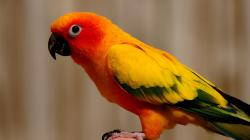 These wallpapers are high definition and available in wide range of sizes and resolutions. Download Sun Conure Parrots HD Wallpapers absolutely free for ...