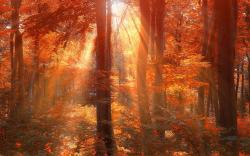 Sun rays autumn forest