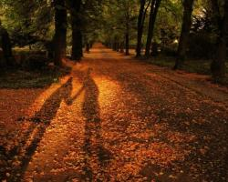 Wallpaper Tags: orange shadow nature fall leaves silhouettes