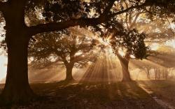 Earth - Sunbeam Wallpaper