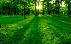 Sunbeams in park Wallpapers Pictures Photos Images. «