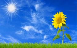 blue sky sunflower wallpaper