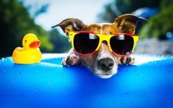Sunglasses Wallpaper; Sunglasses Wallpaper ...