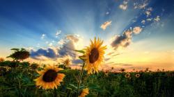 Stunning Sunlight Wallpaper