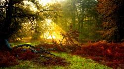 Lovely Sunlight