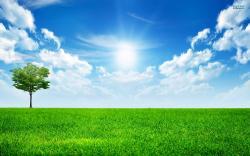 A Bright Sunny Day wallpaper
