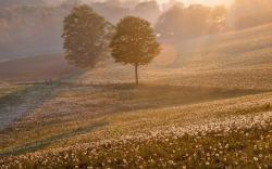 Sunrise summer dandelion
