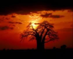 wallpaper other landscape Sunset Behind Tree