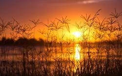 Sunset grass blades