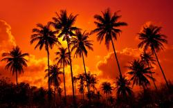 Red sunset palms