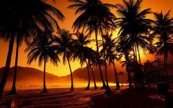 Sunset Palms Beach