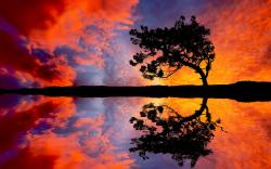 Tree Sunset Reflection