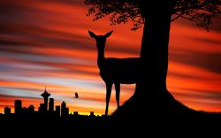 Deer Silhouette Wallpaper High Quality